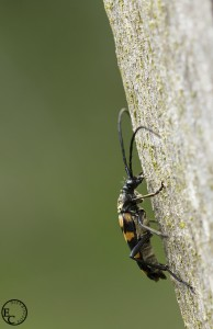 Insect verticaal